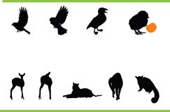 Vector animals collection Royalty Free Stock Photos