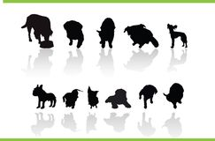 Vector animals collection Stock Photography