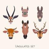 Vector animals heads set. Lama deer antelope donkey horse cow Stock Photos