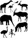 Vector animals silhouettes. Nine detailed vector silhouettes of various wild animals: giraffe, caribbean flamingo, swallow, blackbuck, elephant, scimitar horned Stock Image