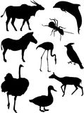 Vector animals silhouettes. Nine detailed vector silhouettes of various wild animals: eland antelope, ant, bottle-nosed dolphin, grevy zebra, caribbean flamingo Stock Photo