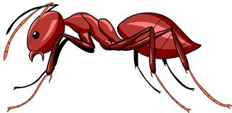 Vector ant. Vector red ant isolate on white background Royalty Free Stock Image
