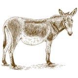 Engraving illustration of donkey royalty free illustration