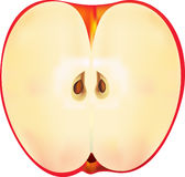 Vector apple. Stock Photography