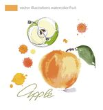 Vector apple drawn with paint blots. Watercolor  illustration. Stock Photography