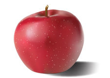 Vector apple Royalty Free Stock Image
