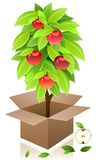 Vector apple tree. stock illustration