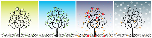 Vector apple tree. Apple tree in four seasons of year Royalty Free Stock Images