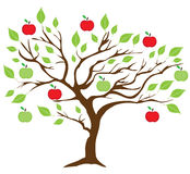 Vector apple tree Stock Image