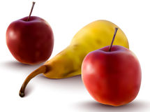Vector apples and pear. Realistic illustration of apples and pear - vector illustration Royalty Free Stock Image