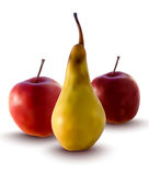 Vector apples and pear. Realistic illustration of apples and pear - vector illustration Stock Photo