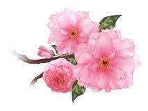 Vector a arte digital do ramo cor-de-rosa realístico da flor de sakura da cereja 3D ilustração do vetor