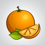 Vector artistic fruits - orange Stock Photo