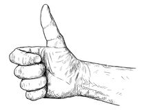 Vector Artistic Illustration or Drawing of Thumb Up Hand Gesture. Vector artistic pen and ink drawing illustration of thumb up hand gesture. Business concept of Stock Photos