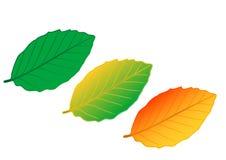 Vector as folhas da cor da ilustração ilustração royalty free