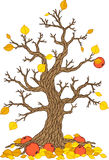 Vector autumn apple tree. Tree collection. Tree season Royalty Free Stock Photos