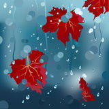 Vector autumn background Stock Photo