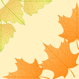 Vector autumn background. Vector autumn background with maple and birch leaves Stock Images