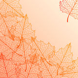 Vector autumn background. Vector autumn background with birch multicolor leaves Royalty Free Stock Photos