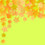 Vector autumn background. Vector autumn background with maple multicolor leaves Stock Photo