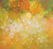Vector autumn background. Vector abstract, yellow  leaves autumn background Stock Images