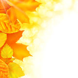 Vector autumn background. Autumn background with bright golden leaves, vector illustration Stock Image