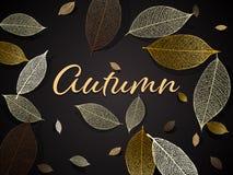 Vector autumn background. Vector illustration - autumn background with skeleton leaves. EPS 10 vector illustration