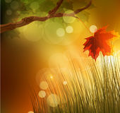 Vector autumn background with maple leaf Stock Images