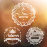 Vector autumn background Stock Image