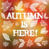 Autumn is here. Vector illustration. Vector autumn background with text `Autumn is here Royalty Free Stock Images