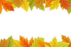 Vector autumn background on white Stock Photo
