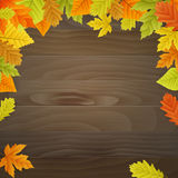 Vector autumn background on wooden board. Vector autumn background with colored leaves on wooden board. iso lated Stock Photos