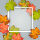 Vector Autumn Card Stock Image