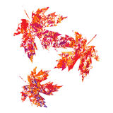 Vector autumn colored maple leaves on white background in grunge style. Autumn colored maple leaves on white background in grunge style vector illustration