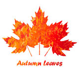 Vector autumn colored maple leaves on white background in grunge style. Autumn colored maple leaves on white background in grunge style royalty free illustration