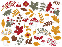 Vector Autumn Forest Set with Strawberries, Mushrooms, Leaves and Flowers. Vector autumn forest set with , berries, mushrooms, flowers, strawberries, amanita Stock Images