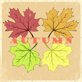 Vector autumn hand drawn leaves. Vector autumn leaves typography. Hand drawn maple leaves background Stock Photos