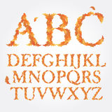Vector autumn latin alphabet, consisting of bright. Leaves illustration Royalty Free Stock Photography