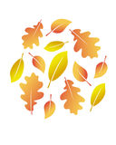 Vector autumn leaves Royalty Free Stock Image