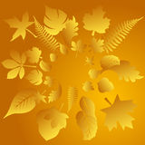 Vector autumn leaves background Stock Images
