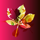 Vector autumn leaves background Stock Image