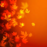 Vector autumn leaves background design, unfocused blurred red maple leaves backdrop Royalty Free Stock Images