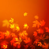 Vector autumn leaves background design, unfocused blurred red maple leaves backdrop. Illustration Royalty Free Stock Photo