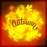 Vector autumn leaves background design, unfocused blurred red maple leaves backdrop Stock Image