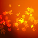 Vector autumn leaves background design, unfocused blurred red maple leaves backdrop Royalty Free Stock Photography