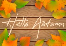 Vector autumn leaves. stock illustration