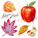 Vector autumn leaves, mushrooms and apple Royalty Free Stock Photo