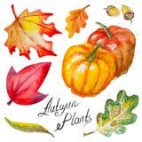 Vector autumn pumpkins,leaves and acorns stock illustration