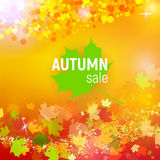 Vector autumn sale background with red, orange, green and yellow falling autumn leaves. And circles on a orange background. Autumn sale background with colorful Royalty Free Stock Image
