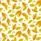 Vector autumn seamless background Stock Photos